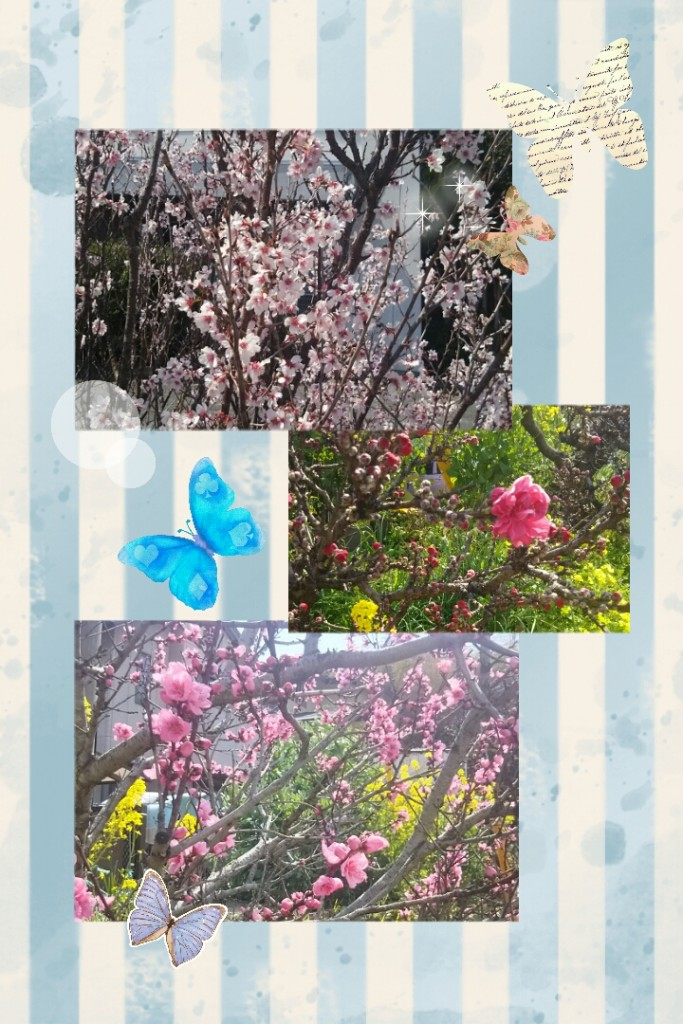 camerancollage2017_03_26_185745